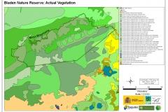 Bladen Nature Reserve: Actual Vegetation
