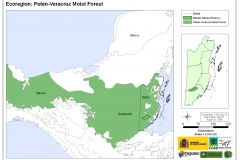 Ecoregion: Peten-Veracruz Moist Forest