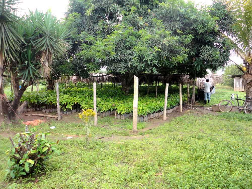 the-nursery-before-planting-for-web