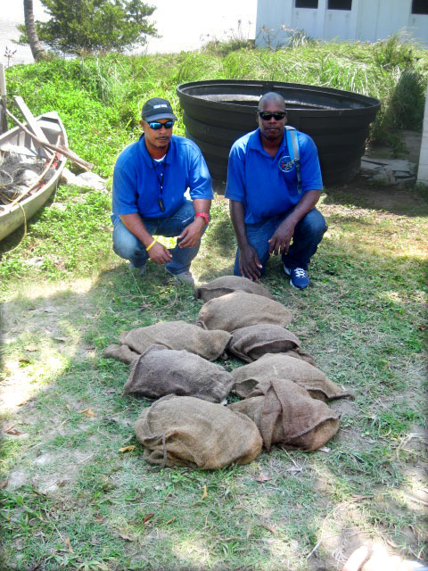 Belize Fisheries Officers with confiscated Hicatees.