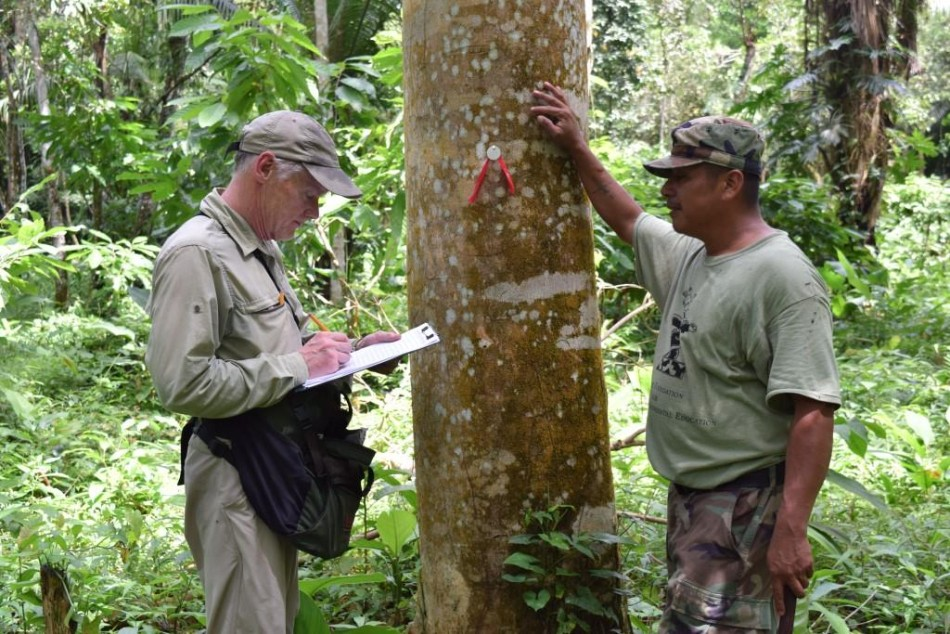 Dr. Stewart Skeate of Lees-McRae College and Sipriano Canti, BFREE Head Ranger and Tour Guide tag trees in the cacao grid for the fruit phenology study