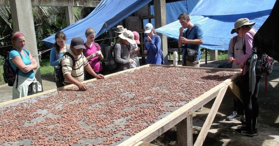 Canterbury High School takes a tour of the BFREE cacao farm and drying facility