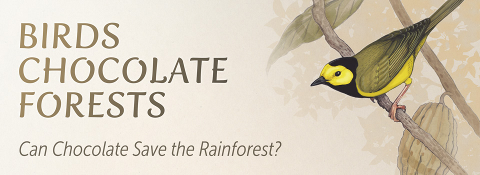 Birds, Chocolate, Forests