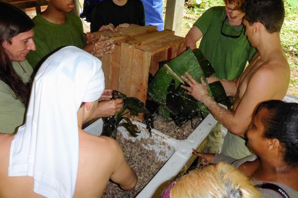 fermentation of cacao