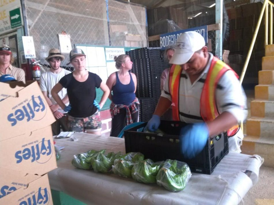 Sterling College visited the packing shed of a local banana farm