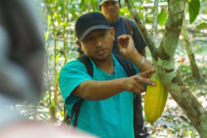 cacao in the rainforest